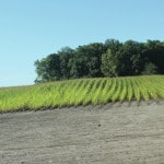 Corn, soybeans try to withstand weather