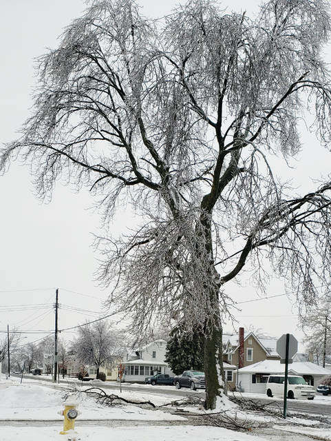 A tree coated in ice is surrounded by fallen branches on Tuesday at the Marshall and Oak streets in Wauseon.
