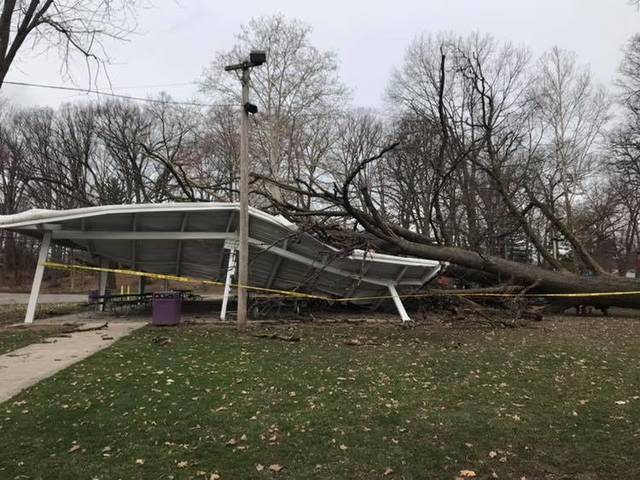 A tree fell on the Beard Pavilion in Swanton on Thursday morning.