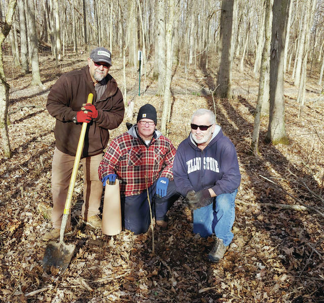 Wauseon Tree Commission members, from left, Larry Frey, Tom Collins, and Rick Frey planted Ohio Buckeyes in the Indian Hill Trail adjacent to Homecoming Park. Planting the Buckeyes is part of an enhancing project to plant trees of various species in place of dead ash trees that were removed last year. There are tree identification plaques throughout the walking trails.