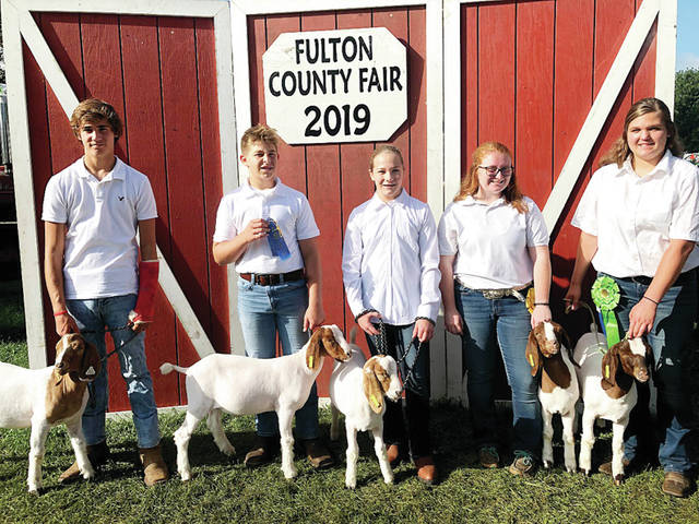 Members of Wauseon FFA who showed animals at this year's Fulton County Fair include, from left, Keegan Waxler, fifth place, senior showmanship; Kallie Waxler; Kale Waxler; Audrey Leininger, fourth place, market class; and Lindsay Oldham, fifth place, market class. Other winners included Hayley Orzechowski, third place, showmanship class, and first place, Skillathon; McKayla Clymer, third place, showmanship, and fourth place, weight class; Mallorie Strauss, fifth place, weight class; Madison Rufenacht, fifth place, showmanship; and Amber Rufenacht, fifth place, showmanship. Wauseon FFA also had over 20 agriculture business and still projects exhibited at the fair.