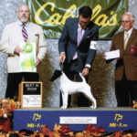 Kennel Club dog show this weekend