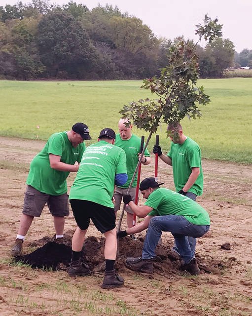 Volunteers working on the Indian Hill Trail project in Wauseon planted 40 trees along the route.