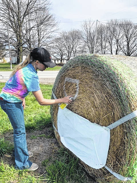 Allison Herr, a local 4-H member, kept busy recently by practicing her hay bale decorating skills outside of Swanton.