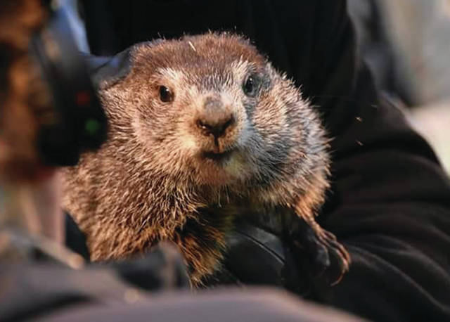 Kris Mellinger | for AIM Media Midwest Punxsutawney Phil did see his shadow this morning at Gobler's Knob in Pennsylvania, indicating six more weeks of winter ahead. An estimated 30,000 people braved 14 degree temperatures to witness Phil's prediction.
