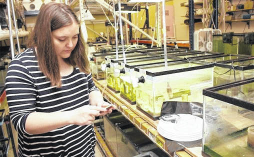 Ashlea Kennedy, an undergraduate Applying Scientific Knowledge research student at Wright State, works in the aquarium room. The College of Science and Mathematics received a $1 million grant to expand the research program.