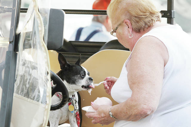 Janice Howell, of New Bremen, gives her dog Mimi some homemade ice cream at the Buckeye Farm Antiques, Inc. Twenty-Ninth Annual Show held at the Shelby County Fair Grounds Saturday, May 26.