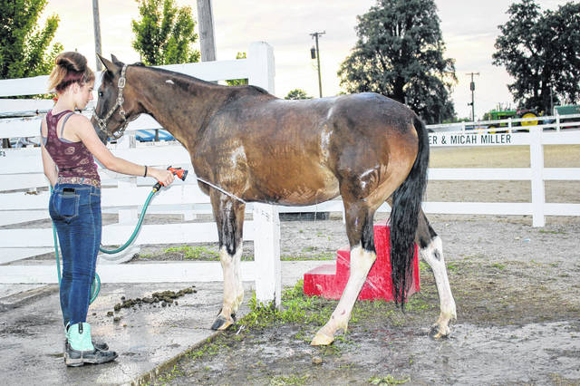Laci Hutchinson, 14, daughter of Michelle Hutinson, of Sidney, sprays some cold water on her horse, Simmon's back left leg Monday at the Shelby County Fair. Simmon slipped and fell in a puddle while practicing Sunday night.