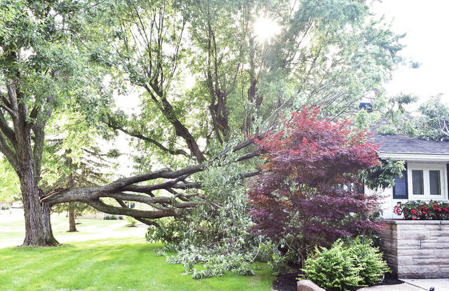 A tree fell on a house on the 1800 block of Port Jefferson Road Tuesday, July 10 after a short rain storm came through. The rain storm was small but the tree was rotted on the inside.