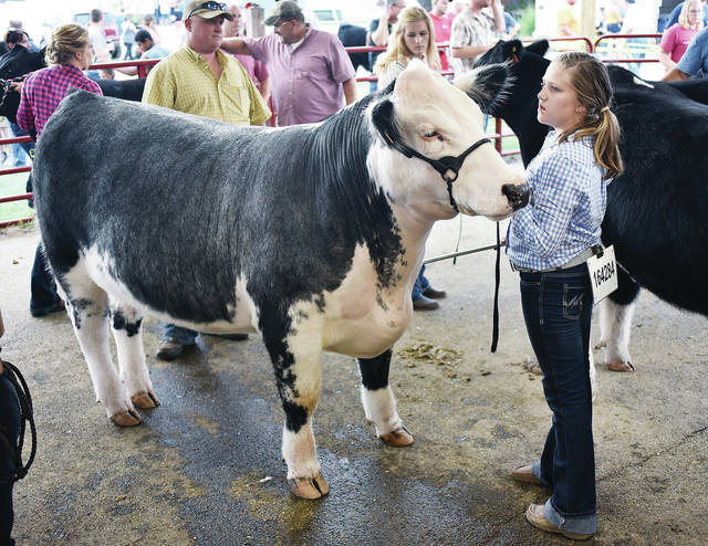 Gentry Barga, 10, of Jackson Center, daughter of Carrie and Tim Barga, waits to show her market steer at the fair Tuesday, July 24.