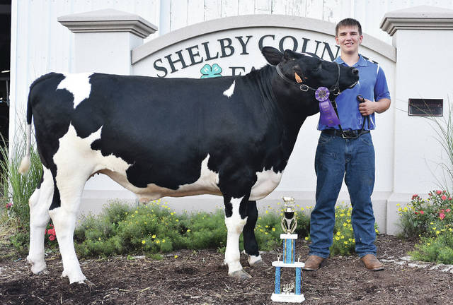 Max Bohman, 16, of Russia, son of Steve and Jenni Bohman, a member of Russia Livestock, won grand champion dairy steer at the fair.
