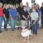 Champion goats, lambs and turkeys