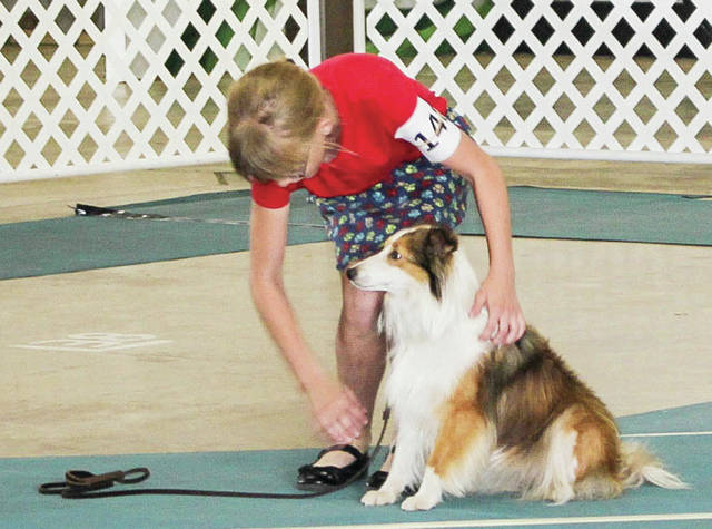 "Lindsey Thornhill, 11, of Anna, daughter of Ron and Carin Thornhill, shows her 4-year-old sheltie "" Daisey,"" during the Junior Fair dog show Saturday, July 28."