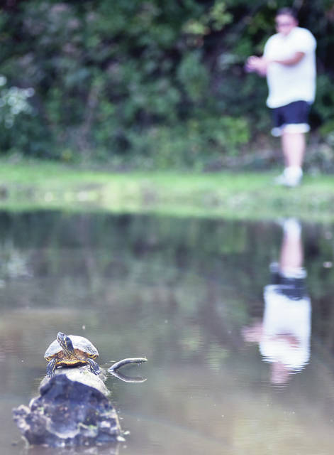Sidney native Danny Martin, of Piqua, fishes as a painted turtle takes in some sun at Tawawa Park Thursday, Sept. 13. Martin says he has to watch out for the turtles, sometimes they will follow his bobber then steal his bait.