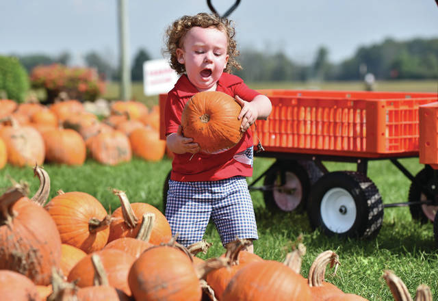 Xavier Hager, 1, of Sidney, son of Kelly and Barry Hager, lifts up a pumpkin that caught his eye at Crossway Farms Wednesday, Sept. 19. Xavier was at Crossway Farms with his grandma, Pat Travis, and aunt, Peg Moreno. Xavier also visited the farm's sunflower garden.