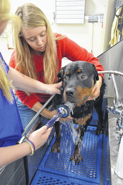Kyra Buchanan, a 2018 UVCC graduate, tries out a dog-washing station at the Upper Valley Career Center's new Veterinary Science Building in Piqua, recently. The facility will be open to visitors, Thursday, from 5 to 7 p.m. Staff and students will show guests the state-of-the-art facility. Sponsoring the open house are the chambers of commerce of Sidney-Shelby County, Piqua, Troy and Tipp City.