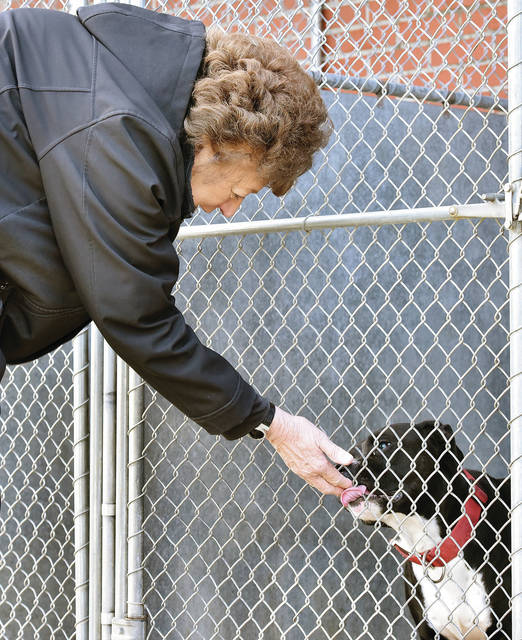 Linda Hess, of Versailles, visits with a lab named Zach at the Shelby County Animal Shelter Thursday, Jan. 3. Hess was looking for a female lab but the shelter only had two male labs. The animal shelter currently has 19 dogs and 8 cats up for adoption.