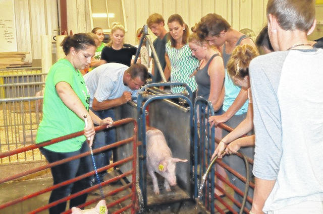 Sophomore members in the Livestock Science class of the Anna FFA raised six pigs from September to November 2018. The pigs were separated into three pens and given three different feeds: commercial show feed, regular show feed, and show feed with additives. The students tested rate of gain and which feed would give the best overall show appearance. In November the students learned how hog meat is cut and how sausage is made, which was demonstrated with one of the pigs that was raised.