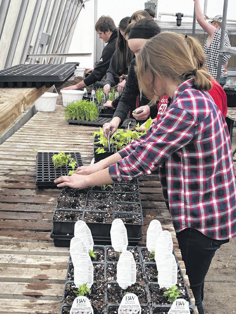 Fort Loramie-UVCC students prepare the greenhouse for the flower sale.