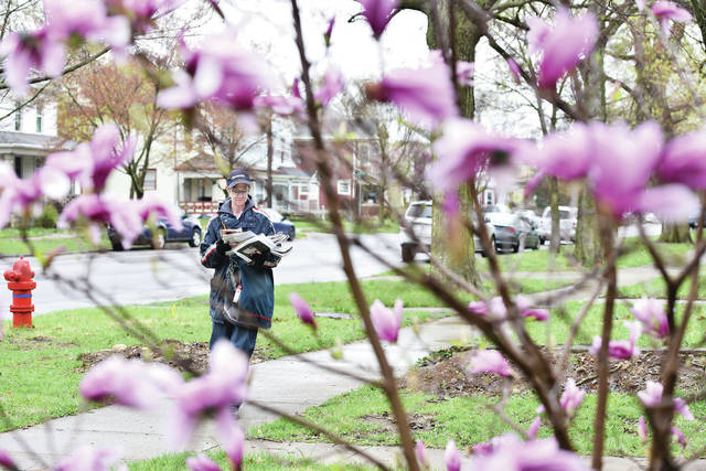 Framed by pink flowers on a bush, U.S. Postal Service employee Cindy Kremer, of Coldwater, delivers mail along South Main Avenue Friday, April 19. Blooming spring flowers can be seen all over the area as they begin to reach their peak.