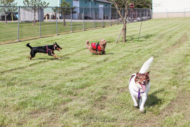 Running around Anna's new dog park are, left to right, Zola owned by Seth and Brianna Opperman, of Anna, Buddy, owned by Amy and Donnie Chupp, of Sidney, and Elsie owned by Bobby Bell and Katie Plas, of Ft. Lormanie. The dog park is located at the northwest corner of the Anna Community Park. The ribbon cutting was held Monday, June 3. The ribbon was cut by project manager Jason Fogt and donor Linda Glessner.