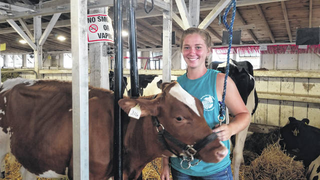 Grace Maurer, 18, has been showing cows for 13 years.