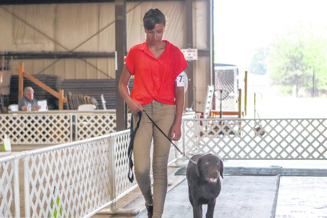 Alexandrea Scheele, daughter of Ryan and Samantha Schmidt, of Anna, and Greggory Scheele, of Anna, competes with her dog Moose, a chocolate lab.