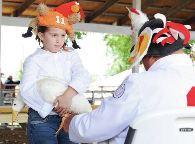 Alexis Kinninger, left, 9, of Sidney, daughter of Tracy and Jay Kinninger, shows her duck to fair judge Larry Lokai during poultry showman at the Shelby County Fair on Wednesday, July 24.