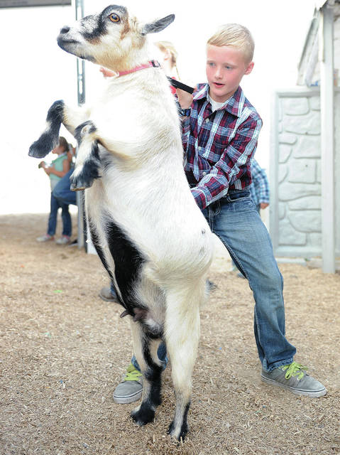 DJ Marsee, 9, of New Knoxville, son of Doug and Lynn Marsee, works to get his goat calmed down as he waits to show him at the Auglaize County Fair on Thursday, Aug. 1.