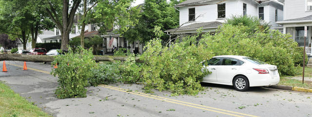 A downed tree blocking the South Miami street in the 500 block.