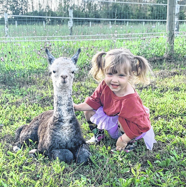 Ella Henry, daughter of Shawn and Jill Henry, of Houston, and her cria are ready for Alpaca Day on Saturday, Sept. 28.