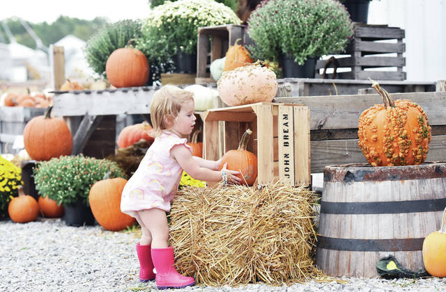 Addison Young, 1, of Sidney, daughter of Karla and Sam Young, looks at a pumpkin display at Crossway Farms on Wednesday, Oct. 2. Crossway Farms, located at 2211 Cisco Road, has a large play area for kids and an extensive pumpkin patch for people who like to pick their own pumpkins.