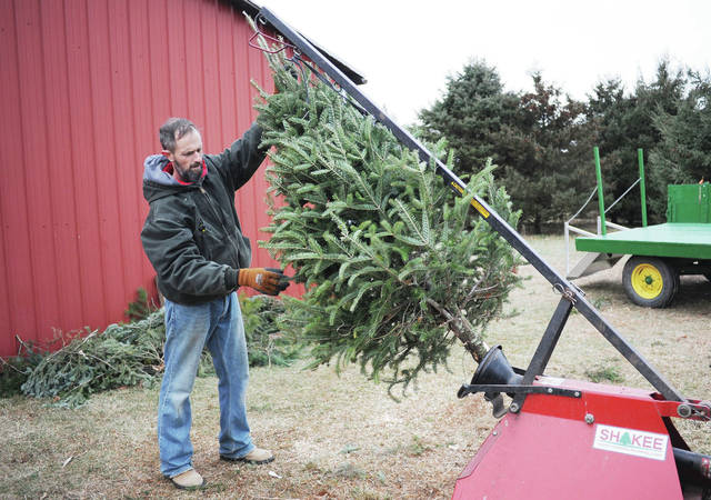 Josh Bell, of Urbana, shakes a Christmas tree with a machine to remove loose needles on Dec. 13. The business opens the day after Thanksgiving each year and closes before Christmas day.
