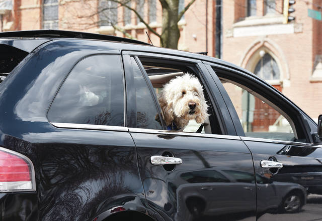 A dog takes in some fresh air while passing Holy Angels Church in a SUV on Tuesday, April 8.