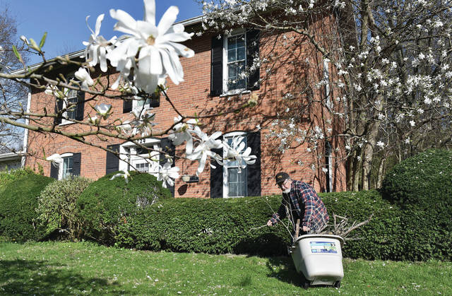 Jim Abbott, of Sidney, picks up sticks in front of his house on Riverside Drive on Thursday, April 10. Blooming magnolia flowers give the yard a strong Easter look. Abbott believes the house was built around 1894 and was owned by the Milligan family. Abbott, who was born and raised in Sidney, has lived in the house for 45 years and has seven children. Abbott planted the magnolia tree next to the house and two magnolia bushes in the front yard.