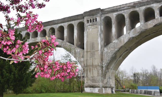 A flowering tree growing in Riverside Park next to the Big Four Bridge on Thursday, April 30.