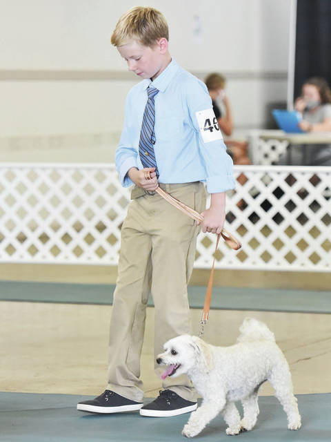 Evan Schulze, 11, of Anna, son of Matt and Lisa Schulze, competes in beginner A novice with his maltipoo, Milo at the Shelby County Fair on Monday, July 27.
