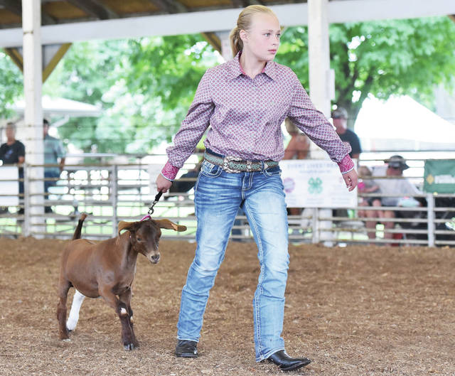Maria Stephenson, 12, of Houston, daughter of Rodney and Maria Stephenson, leads her goat out of Arena 1 after competing in goat intermediate showmanship at the Shelby County Fair on Monday, July 27.