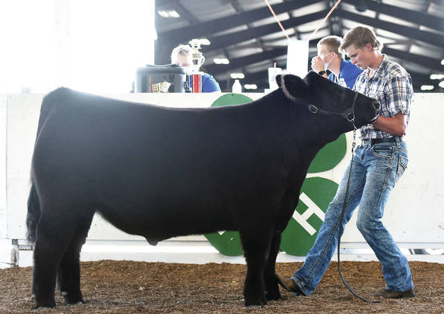 Carson Regula, 17, of Jackson Center, son of Austin and Amy Regula, competes in sr. showmanship at the Shelby County Fair on Tuesday, July 28.