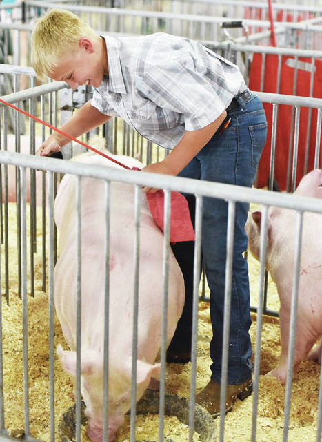 A.J. Siegel, 13, of Fort Loramie, son of Tony and Jill Siegel, grooms his hog, Moose, at the Shelby County Fair on Wednesday, July 29.