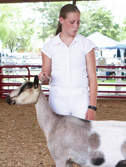 Isabelle Jenkins, 13, of New Bremen, shows her Dairy Goat Lucy, at the Shelby County Fair on Monday, July 27. She got 1st place for jr dairy goat. Jenkins is the daughter of Theresa Jenkins.