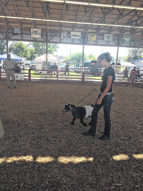 Meredith Hageman, 15, of Fairlawn, member of the Fairlawn FFA and daughter of Gretchen and Jason Hageman, shows her pygmy goat at the Shelby County Fair on Monday, July 27.