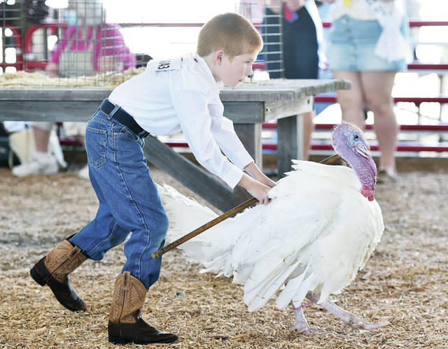 Dane Moniaci, 10, of Sidney, son of Joe and Meghan Moniaci, pushes his market turkey out of the ring after showing it at the Shelby County Fair on Tuesday, July 28.