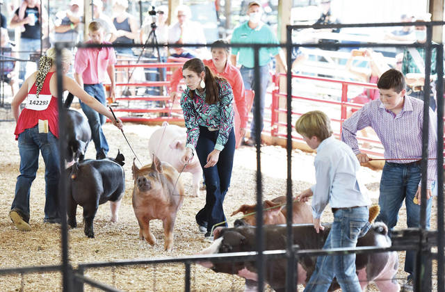 Kids show their hogs at the Shelby County Fair on Wednesday, July 29.