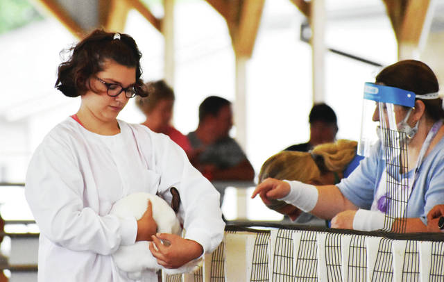 Kelsi Hiler, 11, daughter of Mike & Mindy Hiler, shows a rabbit at the Shelby County Fair on Thursday, July 30.