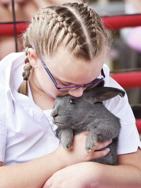 Faith Huelskamp, 10, of Sidney, daughter of Stacy and David Huelskamp, holds her market rabbit while waiting to show it at the Shelby County Fair on Thursday, July 30.