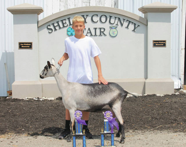 Anthony Pollock won Grand Champion Dairy Milking Doe at the 2020 Shelby County Fair.