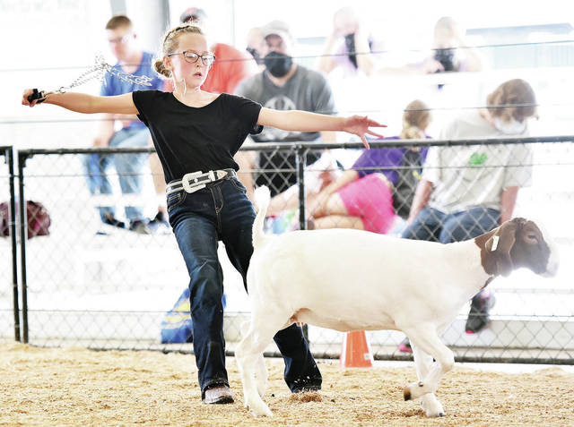 Olivia Wilker, 11, of New Bremen, daughter of Tom and Amy Wilker, falls backward as the chain she was using to control her market goat snaps while showing at the Auglaize County Fair on Monday, Aug. 3. Wilker wasn't phased though. Her goat was quickly wrangled and Wilker finished showing the goat with no signs anything had happened.