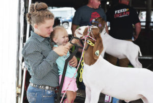 Goats shown at the Auglaize County Fair