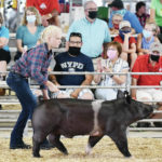 Hogs shown at Auglaize County Fair